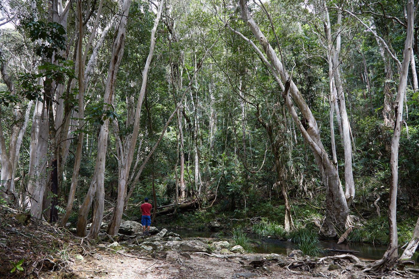Barron Gorge; surprise creek walk, Nationalpark; National Park; Miles and Shores; Reiseblog; Travelblog; Australien; Roadtrip; Australien Roadtrip; Rundreise; wandern