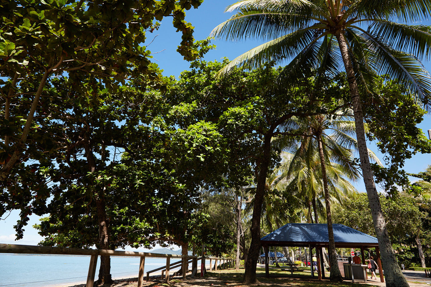 Palm Cove, Cairns, Australien, Roadtrip, Miles and Shores, Reiseblog, Reiseblogger, Palmen