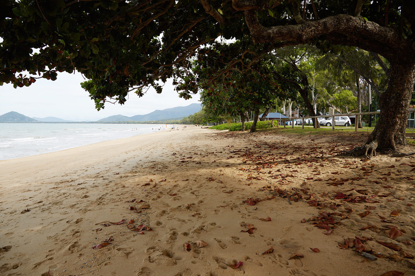 Palm Cove, Cairns, Australien, Roadtrip, Miles and Shores, Reiseblog, Reiseblogger, Strand, beach, Palmen, Paradies