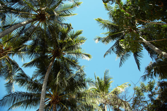 Palm Cove, Cairns, Australien, Roadtrip, Miles and Shores, Reiseblog, Reiseblogger, Palmen, Paradies