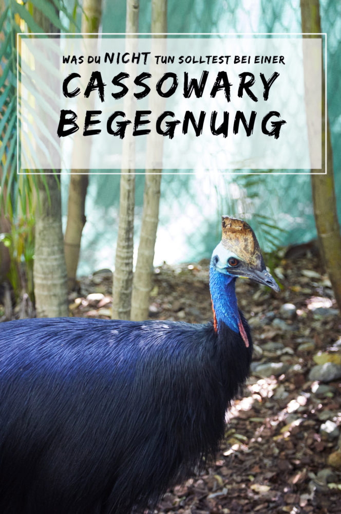 cassowary begegnung, attacke, was tun bei, miles and shores, reiseblog, blogger, travelblog, australien, australia, roadtrip, pin