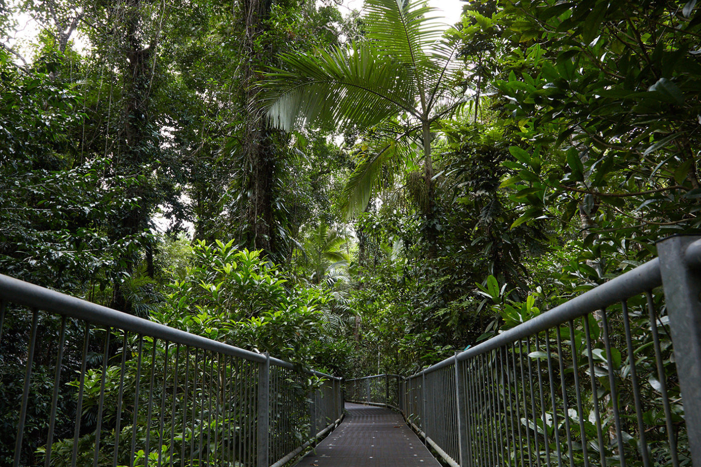 daintree, regenwald, rainforest, reiseblog, roadtrip, australien, milesandshores, forestwalk, daintree discovery center