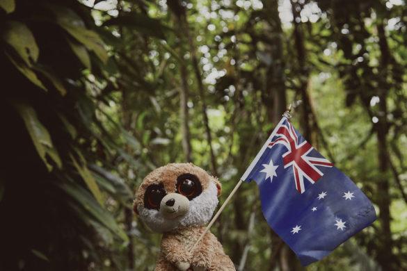 Ed, das Erdmännchen, Maskottchen, Reise, Reisemaskottchen, Miles and Shores, Regenwald, Australien, Flagge, Daintree Rainforest