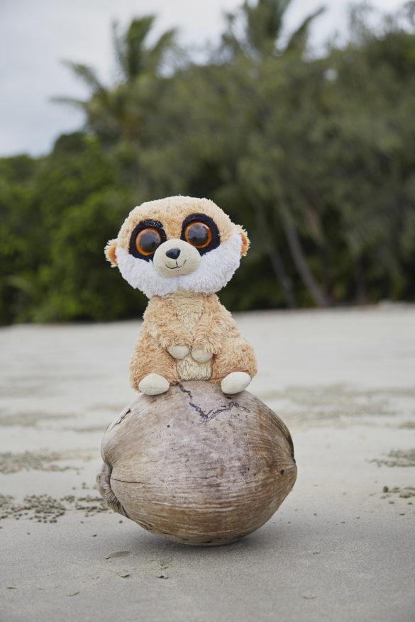 Ed in Australien, Ed, das Erdmännchen, Maskottchen, Reise, Reisemaskottchen, Miles and Shores, Daintree Rainforest, Australien, Australia, Coconut