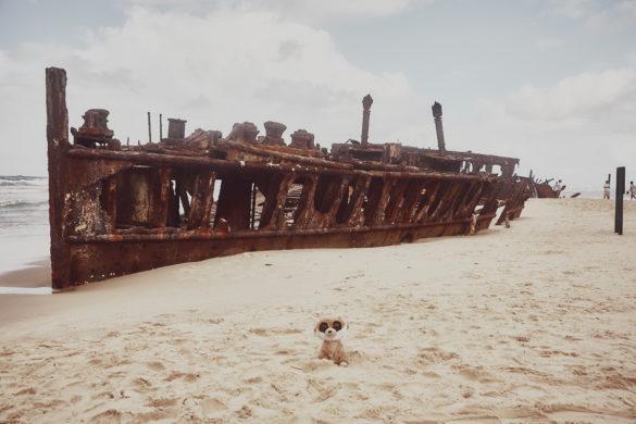 Ed, das Erdmännchen, Ed in Australien, Maskottchen, Reise, Reisemaskottchen, Miles and Shores, Fraser Island, Schiffswrack, Australien, Australia
