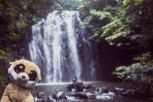Ed, das Erdmännchen, Maskottchen, Reise, Reisemaskottchen, Miles and Shores, Wasserfall, Regenwald, Tropen, tropisch