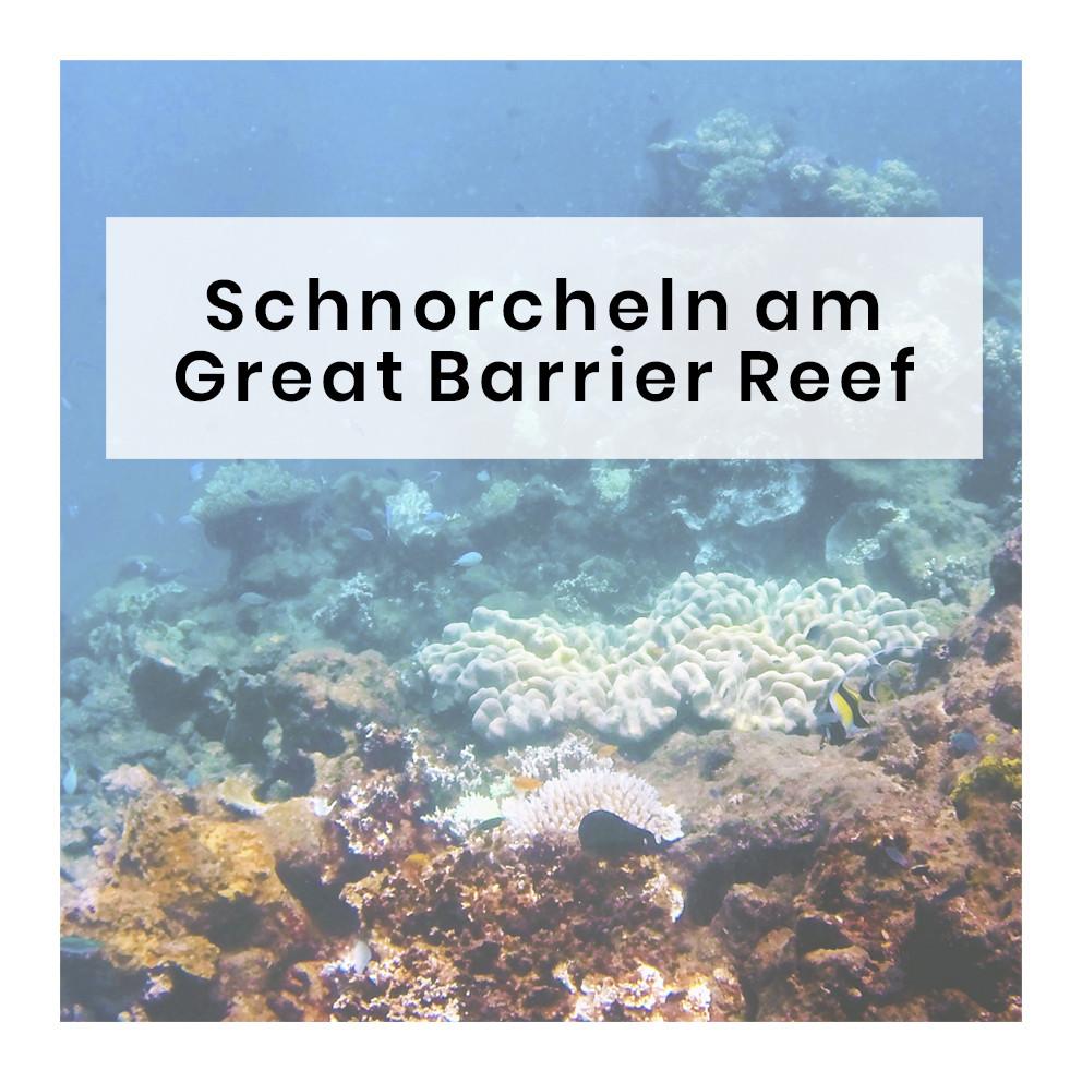 vorheriger post, beitrag, schnorcheln, great barrier reef, australien, ausflug, miles and shores, reiseblog, reiseblogger