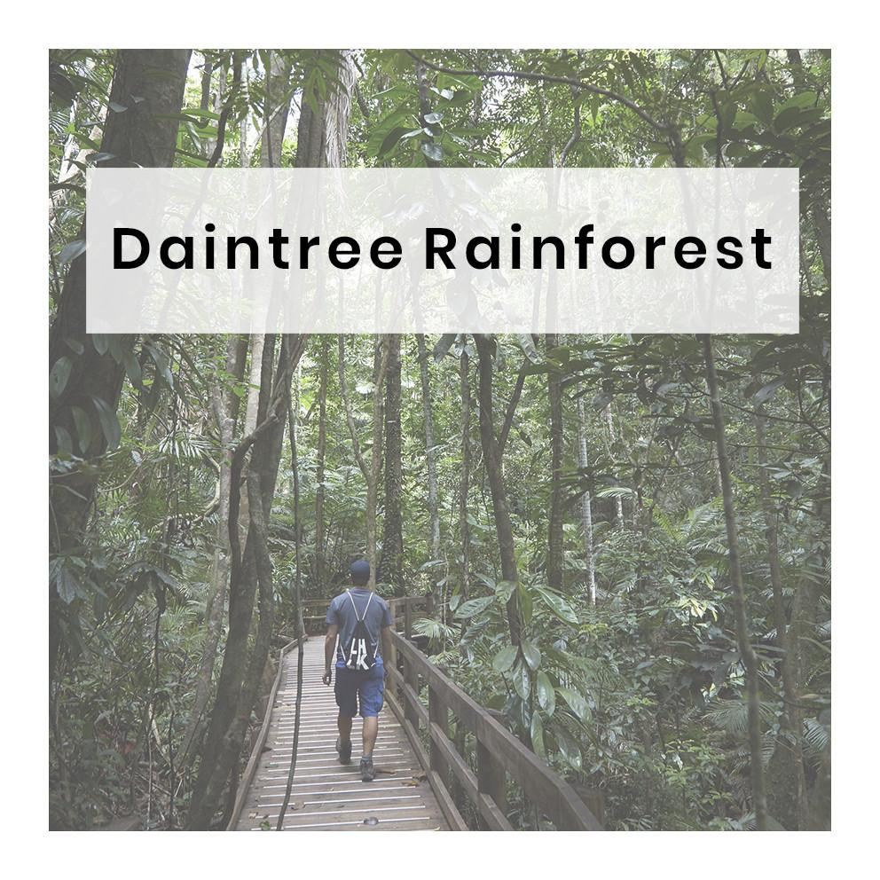 naechster post, beitrag, daintree, rainforest, regenwald, australien