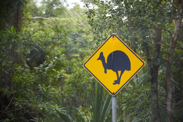 daintree, reiseblog, roadtrip, australien, milesandshores, cape tribulation, daintree rainforest, watch out for cassowary, achtung cassowary