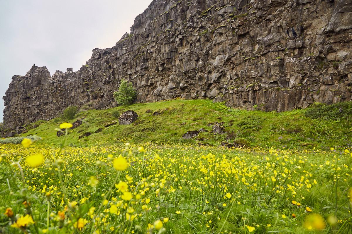 Þingvellir, Pingvellir, Landscape, Landschaft, Island, iceland, roadtrip, rundreise, reise, urlaub, urlaubsplanung, reisebericht, miles and shores, reiseblog, reiseblogger, blumen, fels, felsspalte