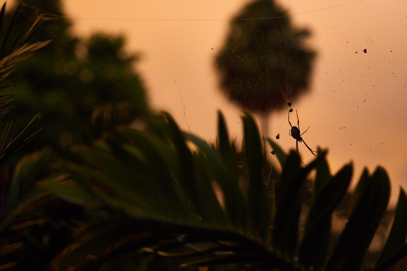 Spinnenphobie nach Australien, arachnophobia to Australia, travel, travelblog, reiseblog, Erfahrung, Erfahrungsbericht, Miles and Shores, Sydney, Royal Botanical Garden