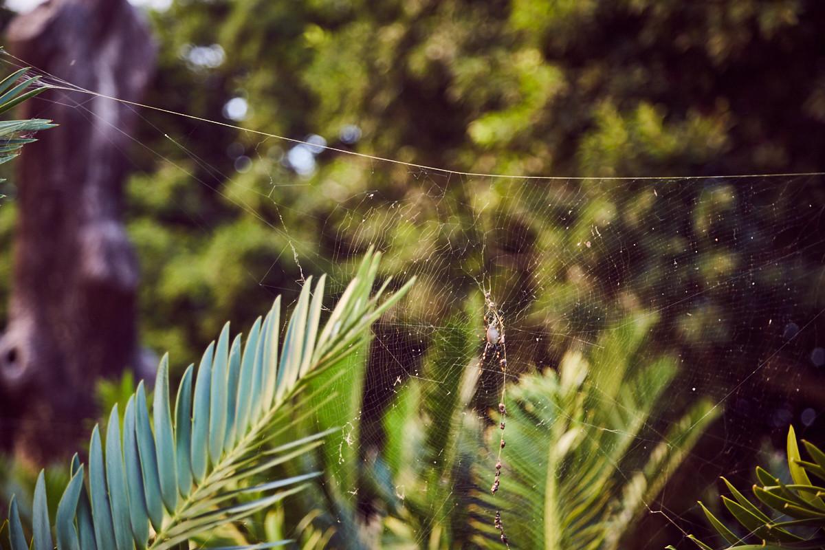Spinnenphobie nach Australien, arachnophobia to Australia, travel, travelblog, reiseblog, Erfahrung, Erfahrungsbericht, Miles and Shores, Spinne, Royal Botanical Garden, Sydney, Orb Spider,