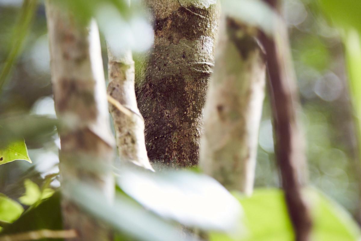 Spinnenphobie nach Australien, arachnophobia to Australia, travel, travelblog, reiseblog, Erfahrung, Erfahrungsbericht, Miles and Shores, Daintree Rainforest, Spinne, getarnt