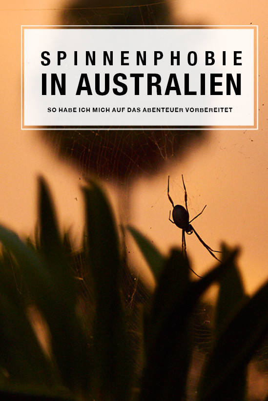 Mit Spinnenphobie nach Australien reisen, Spinnenphobie nach Australien, Australia, Reiseblog, Erfahrung, Erfahrungsbericht, travelblog, Miles and Shores