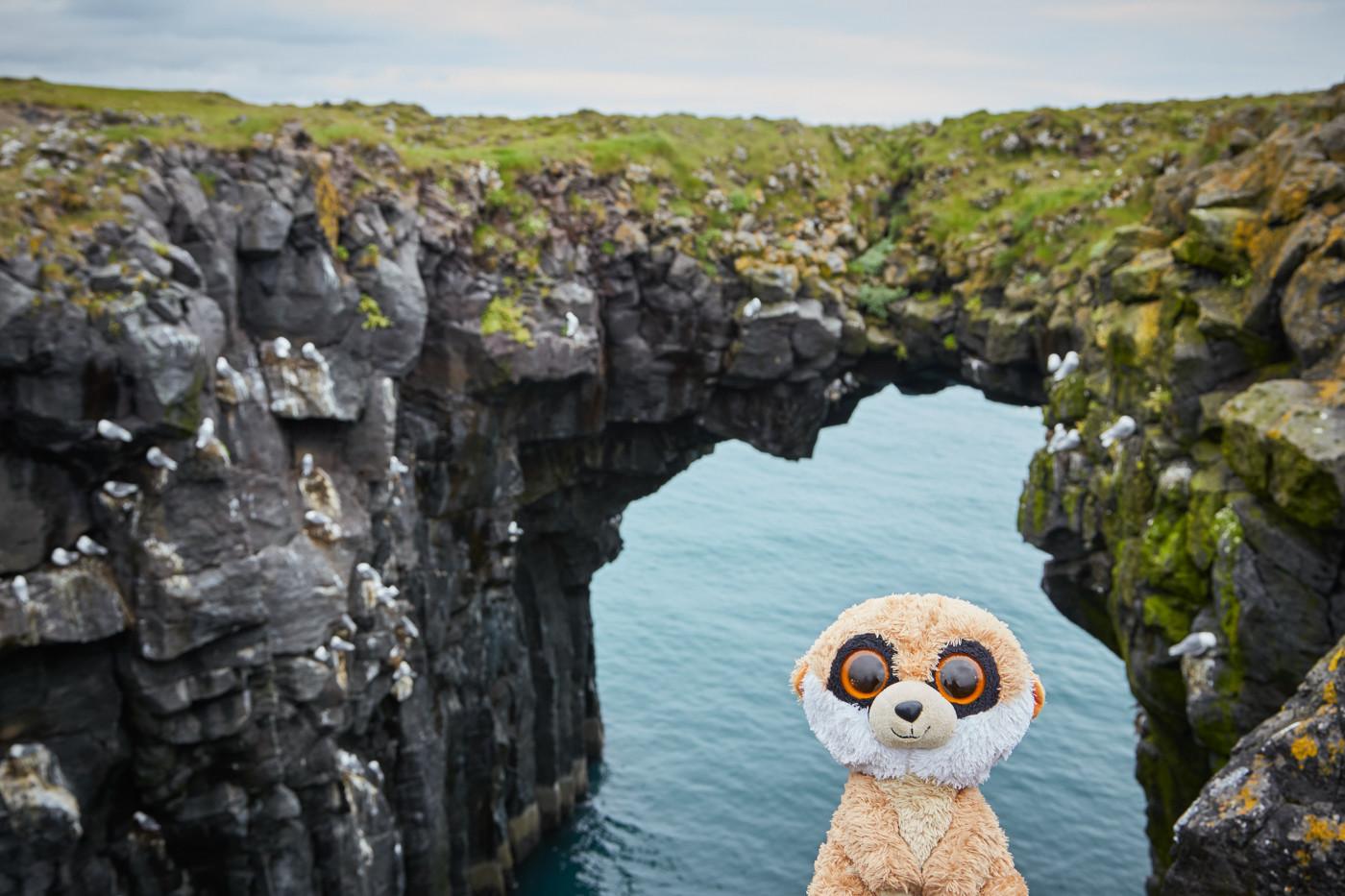 Ed auf Snaeffelsnes, Ed in Island, Ed das Erdmännchen, Reisemaskottchen, Reise Maskottchen, travel maskot, Ed at Snaeffelsnes