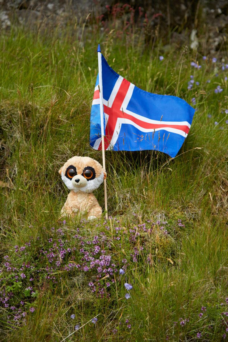 Ed das Erdmaennchen ist unser Reisemaskottchen und ist immer mit auf unseren Reisen. Hier sitzt er mit der isländischen Flagge in einer Wiese während unseres Island Urlaubes
