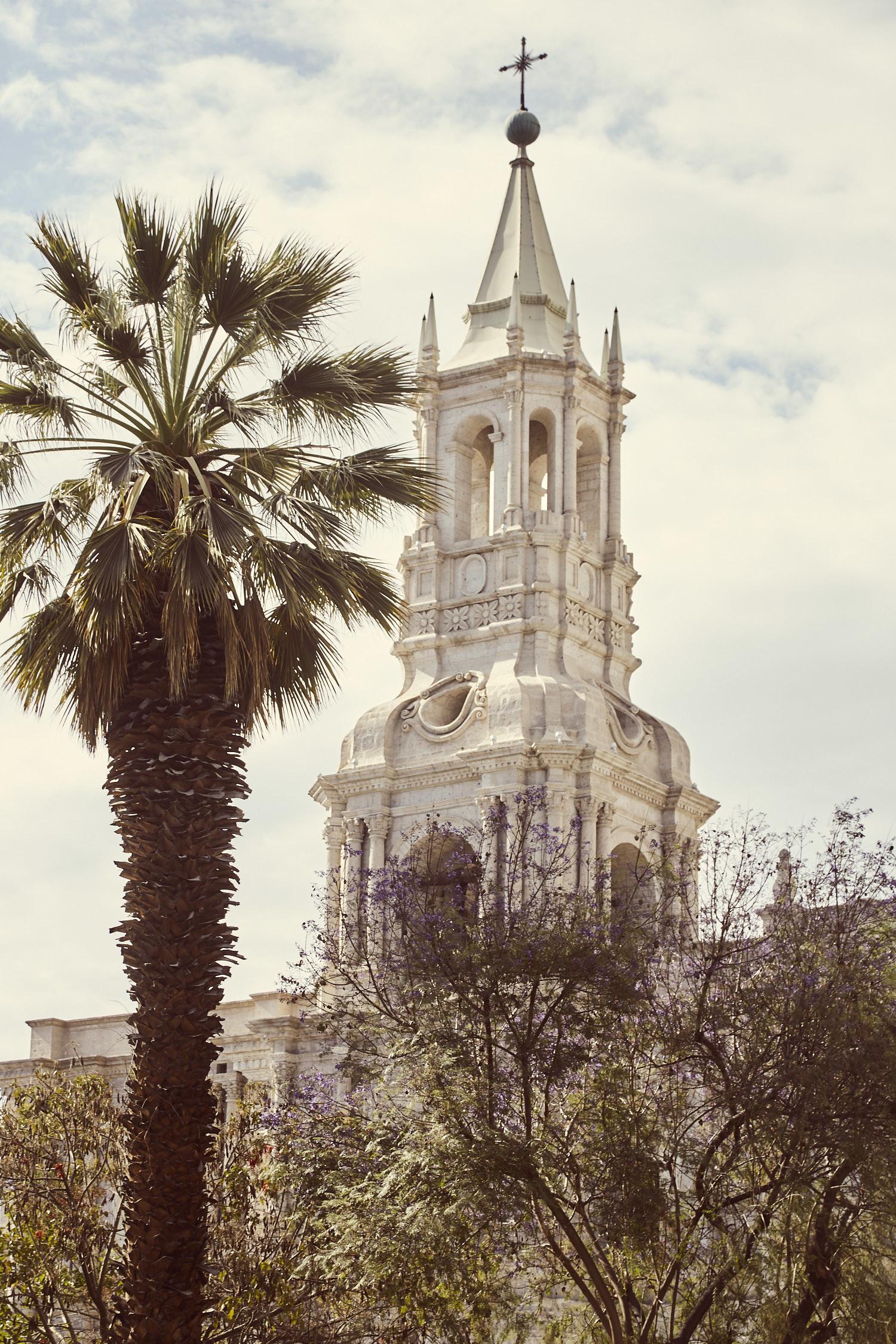 Kirchturm von Arequipa mit Palme im Vordergrund , Peru, Ausflugsziele in Peru
