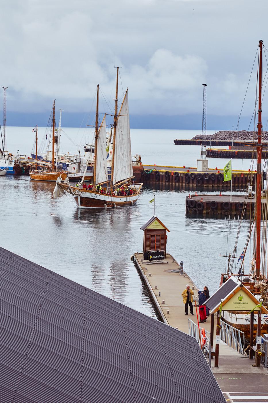 Whale Watching Tour in Husavik, gefahren mit dem hölzernen Segelboot Hildur