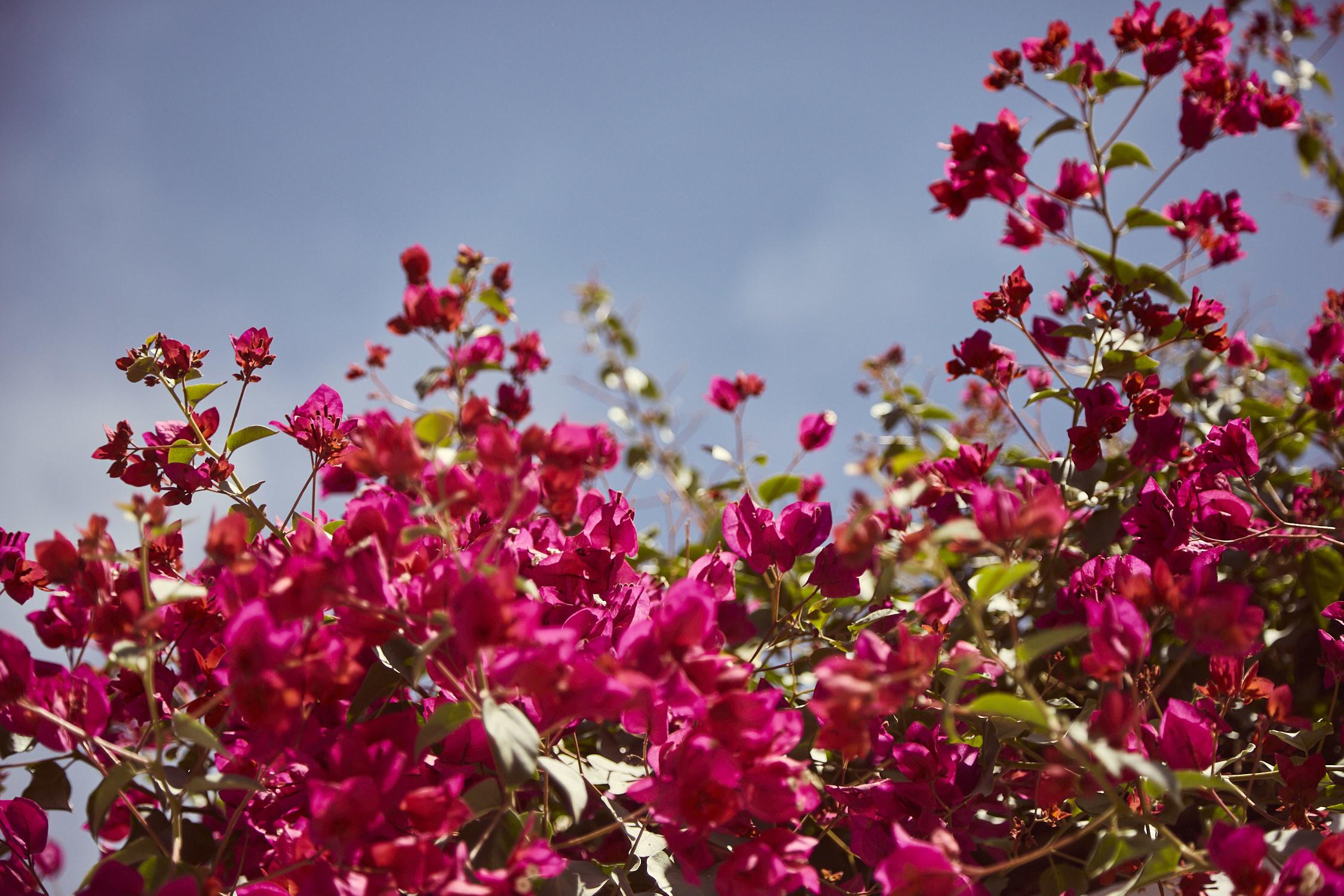 Überall Blumen im Stadtteil Yanahuara in Arequipa