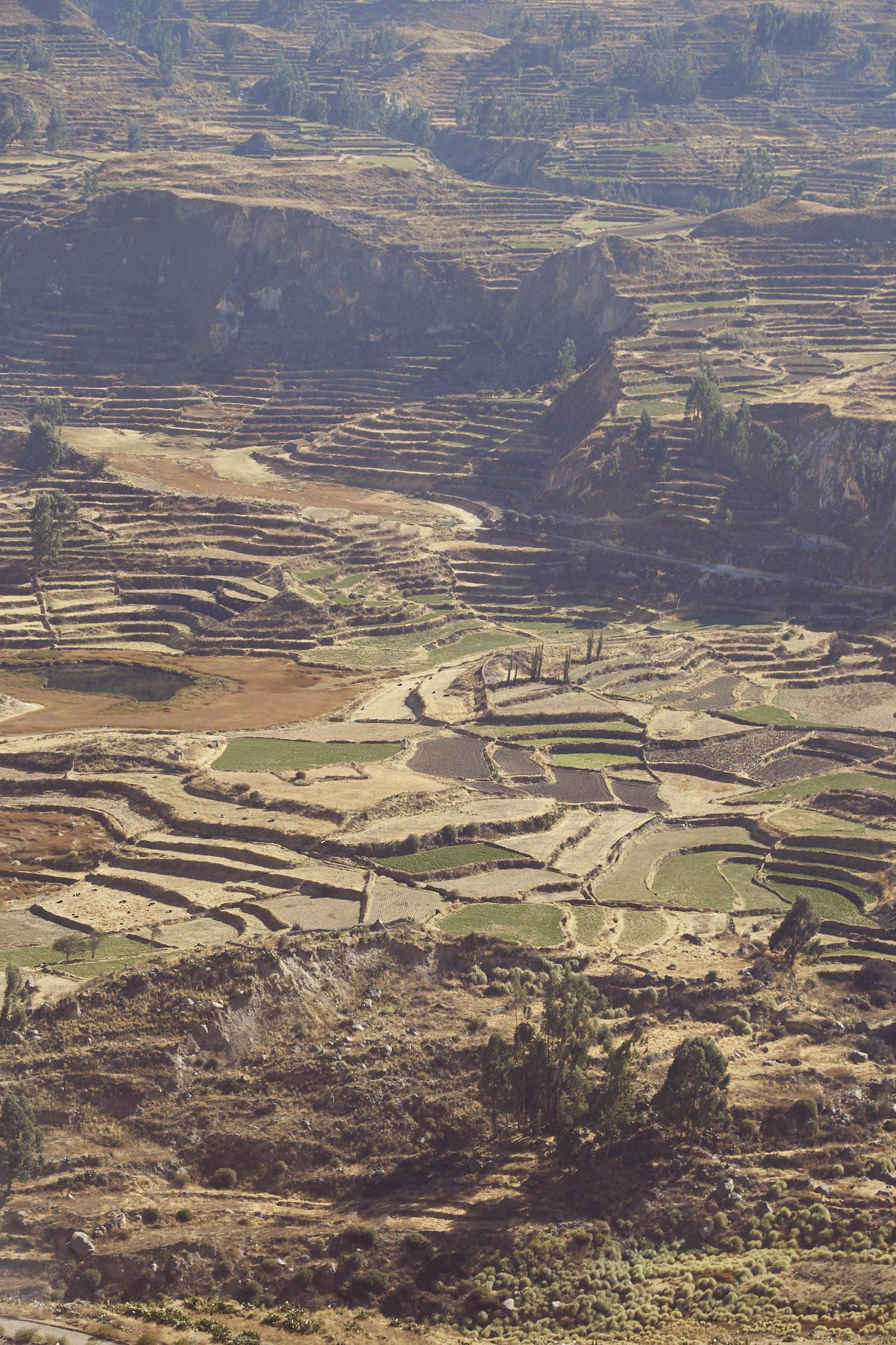 Die wunderbaren Terrassen, die man auf dem Weg zum Colca Canyon in Peru sieht