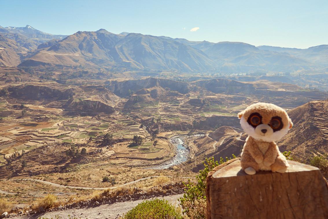 Auch unser Reisemaskottchen Ed das Erdmännchen begleitete uns wieder bei unserem Peru und Chile Roadtrip