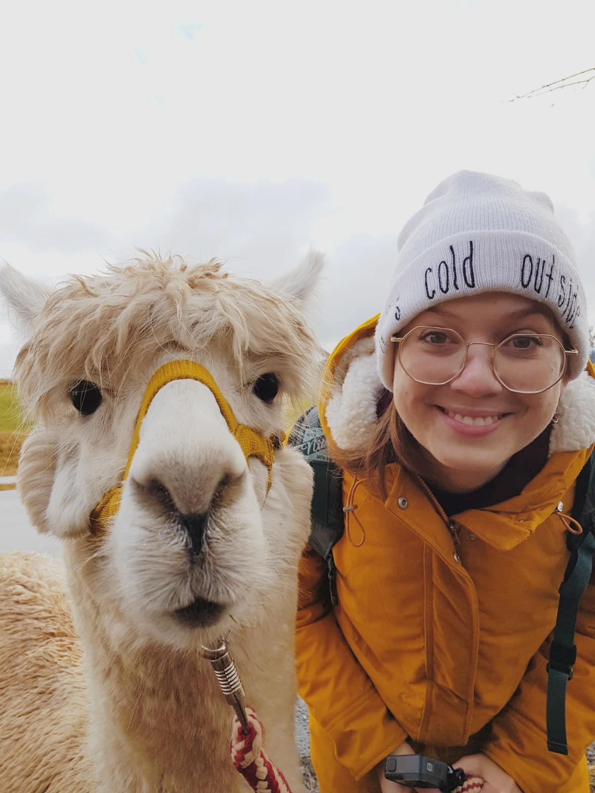 Dieses ist das 6. der lustigen Tierfotos. Es wurde während einer Alpakawanderung gemacht. Pepi war ein sehr freundliches Alpaka! Es ist eines meiner Lieblingsbilder von unseren 6 lustigen Tierfotos auf Reisen