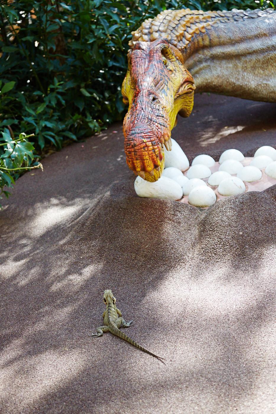 Auch noch Foto 4: Die Eidechse scheint sich mit der großen Dinosauerieratrappe messen zu wollen. Sie starren sich wie bei einem Cowboyduell in die Augen