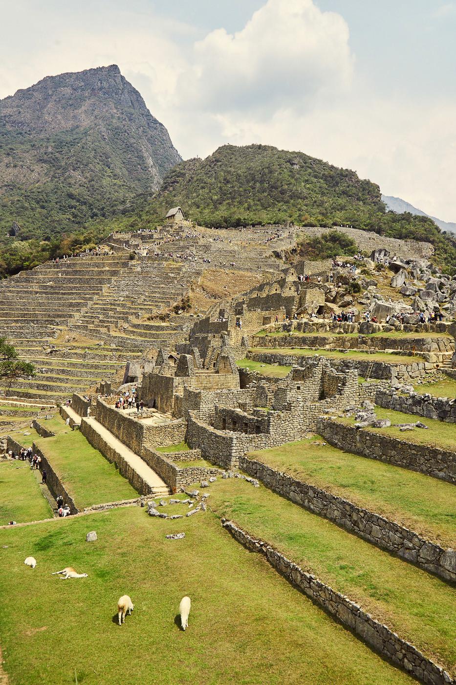 Blick zum Machu Picchu Mountain, davor die Ruinen mit ein paar Alpakas.