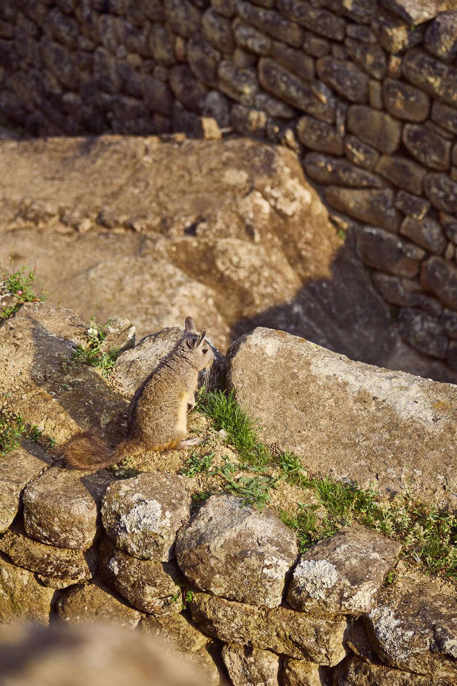 Da war ja tatsächlich ein echter Hase! Kein Urbild der Inka, wie ich zuerst vermutet hatte. Ein süßer, kleiner Pampashase