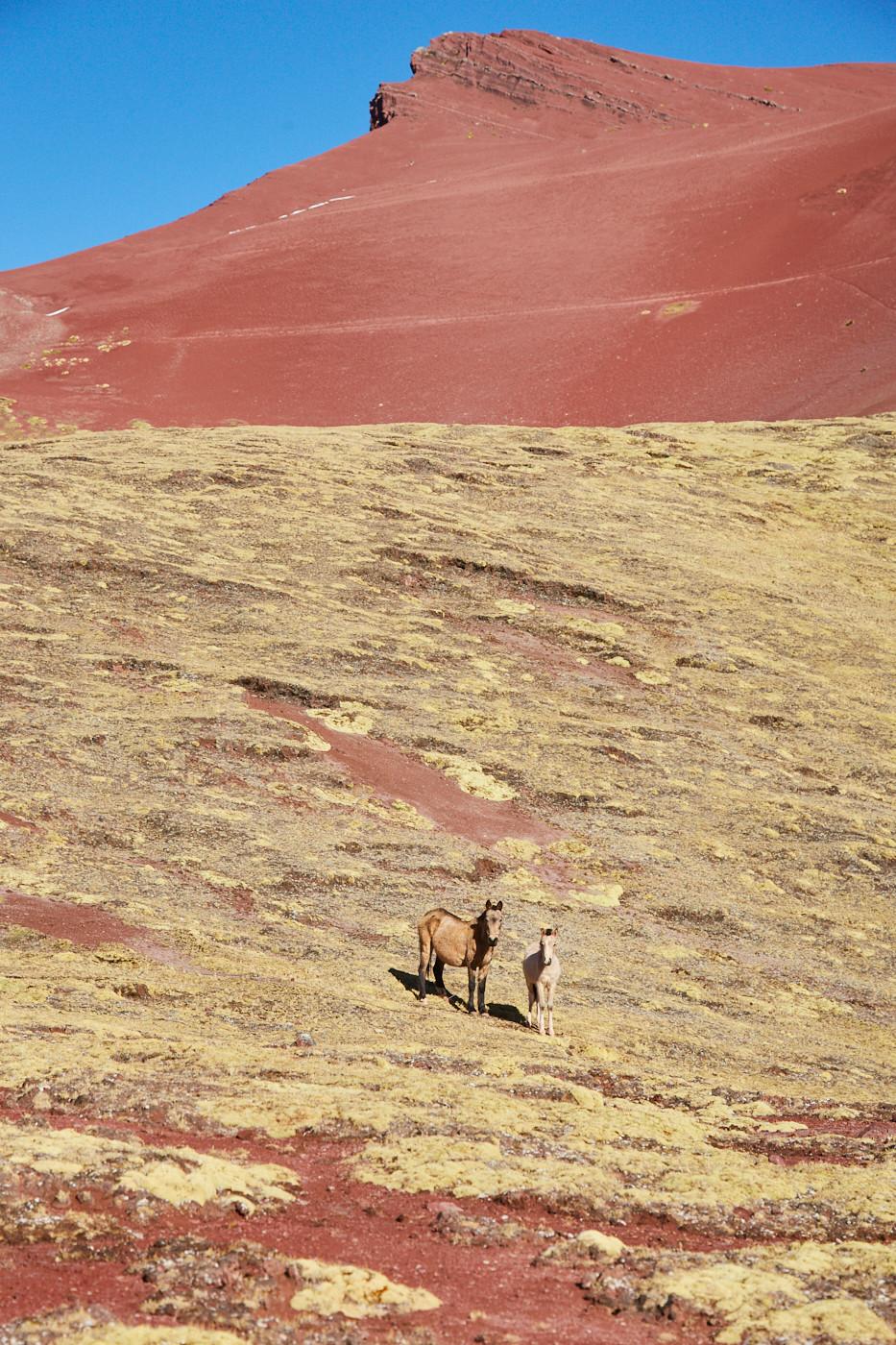 Wilde Pferde beobachteten uns auf unserer Wanderung. Andere Touristen haben wir erst ganz zum Schluss gesehen - die meiste Zeit waren wir vollkommen alleine mit unserem Guide