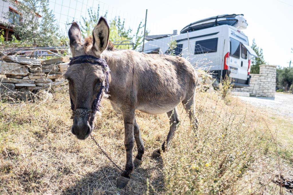 Hier haben die beiden einen Esel auf ihren Reisen mit dem Wohnmobil getroffen